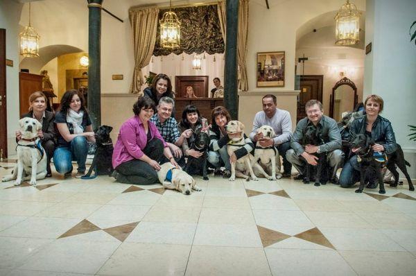 Výnimoční psí súrodenci - labradori Izzi, Idan, Iffi, Ilza, Imro, Indi, Inka, Iska, Ivor a Iwa.
