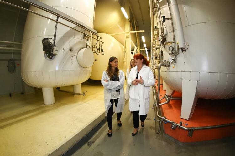 Nela priamo vo výrobni, kde vína kvasia vtankoch. Ingrid Vajcziková ju zaúča do tajov výroby vín asektov.