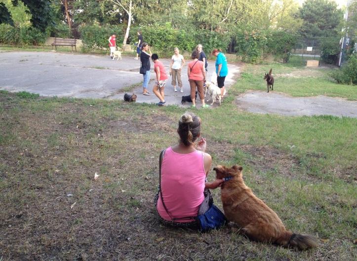 Výbeh sa už po prvých dňoch stal medzi psíčkarmi obľúbeným miestom stretávania.