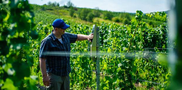 Ericsson predstavil riešenie pre vinohradníkov