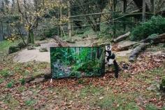 Televízor Sony BRAVIA s rozlíšením 4K v ohrade primátov.