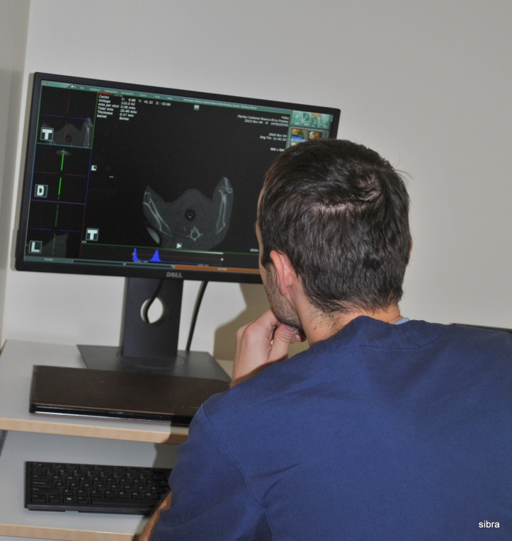 Počítačová tomografia pre zvieratá je dostupná už aj na Slovensku.