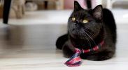 Prvýkrát v histórii Slovenska vstupuje do predvolebného súboja mačka, ktorá má politické ambície. Chce sa stať primátorkou Popradu.